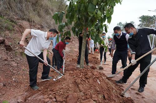 今年鞍山市计划完成植树造林3.16万亩 完成改善自然环境的重大举措