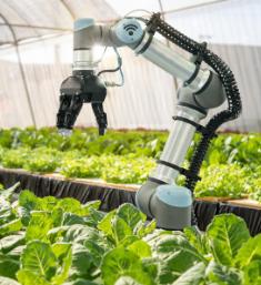 您的公司是否正在使用人工智能来改变行业