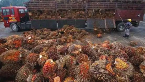 四个月后印度恢复了马来西亚棕榈油的采购