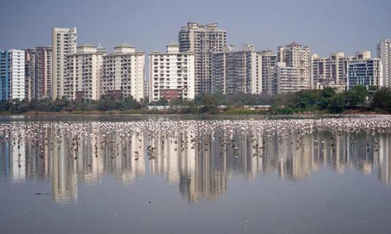 民意调查显示印度房价至少十年来首次下跌