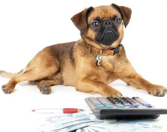 这只宠物股票可以成为投资者的最好朋友