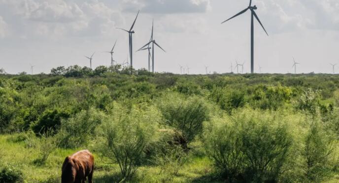为什么ERCOT上周要求德州人节约能源